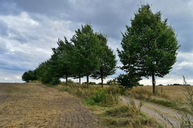FeldwegBerlin - Malchow