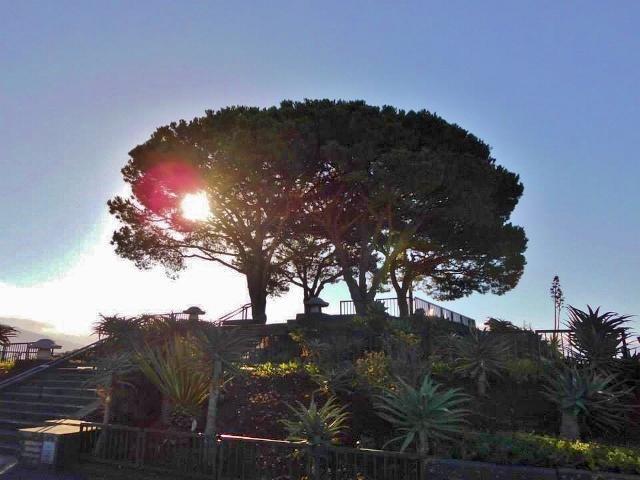 LorberrbaumFunchal - Madeira
